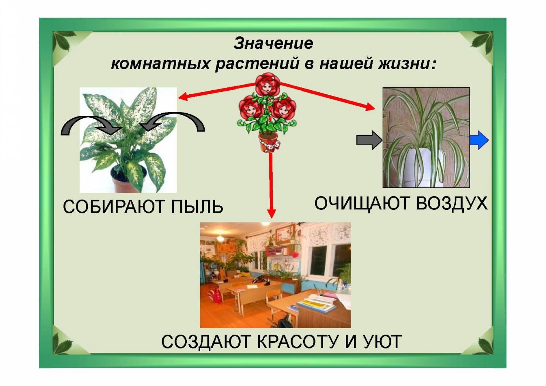 Рисунок растения в жизни человека 3
